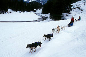 Whistler Activities - Whistler dogsledding tours - BC Canada - Whistler Blackcomb Resort Activity Information