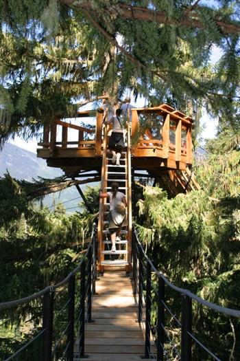 Whistler Treetop Canopy Tours - BC Canada - Whistler Blackcomb Resort Treetop Tour Information
